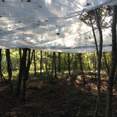 Bos sky, 2016, bos, vliesdoek (200 m2), touw